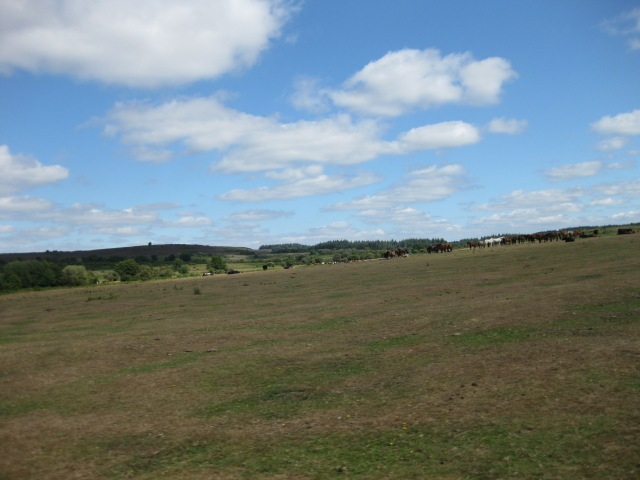 The New Forest is a beautiful landscape that once attracted Victorian specimen collectors.