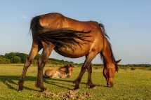Wild ponies give birth naturally, without any human intervention.