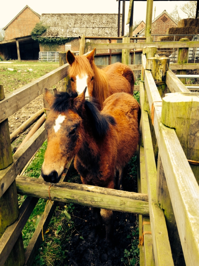 Timber compounds are used to hold the ponies whilst they are being treated.