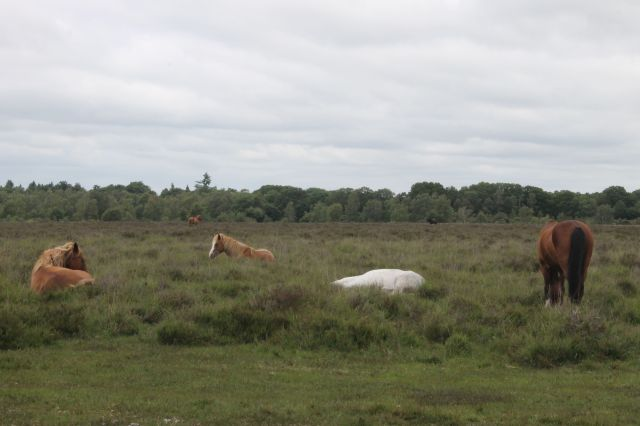Ponies doze standing up but to get a really good sleep they need to lie down.