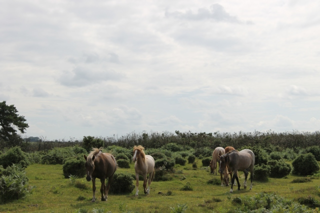 The rules of 'levancy' and 'couchancy' determined how many ponies each Commoner could keep.